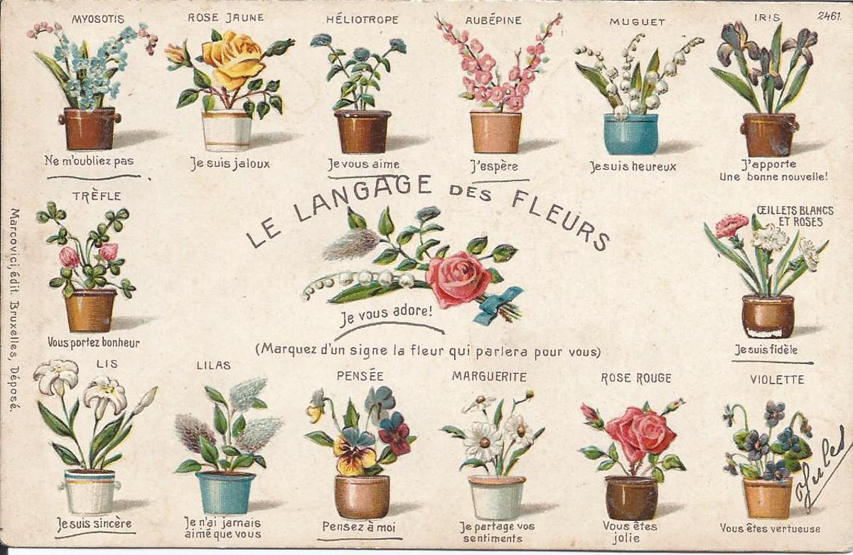 a propos des fleurs est le blog de votre fleuriste a la. Black Bedroom Furniture Sets. Home Design Ideas