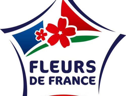 Fleur de FRANCE