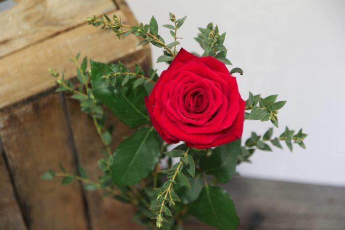 Choix de la couleur de la rose